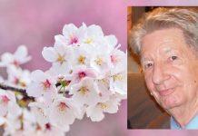 Klaus Nestele mit Kirschblüte